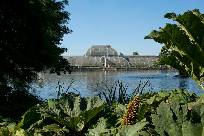 Kew Gardens and Palace Tickets