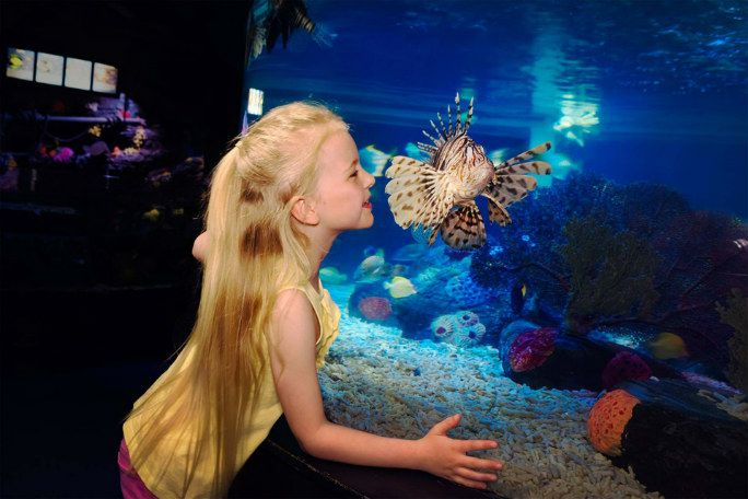 Sea Life London Standard Entry & Behind the Scenes Tour (Advance) Tickets