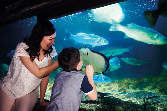 Sea Life London Fast Track Entry (Same Day) Tickets